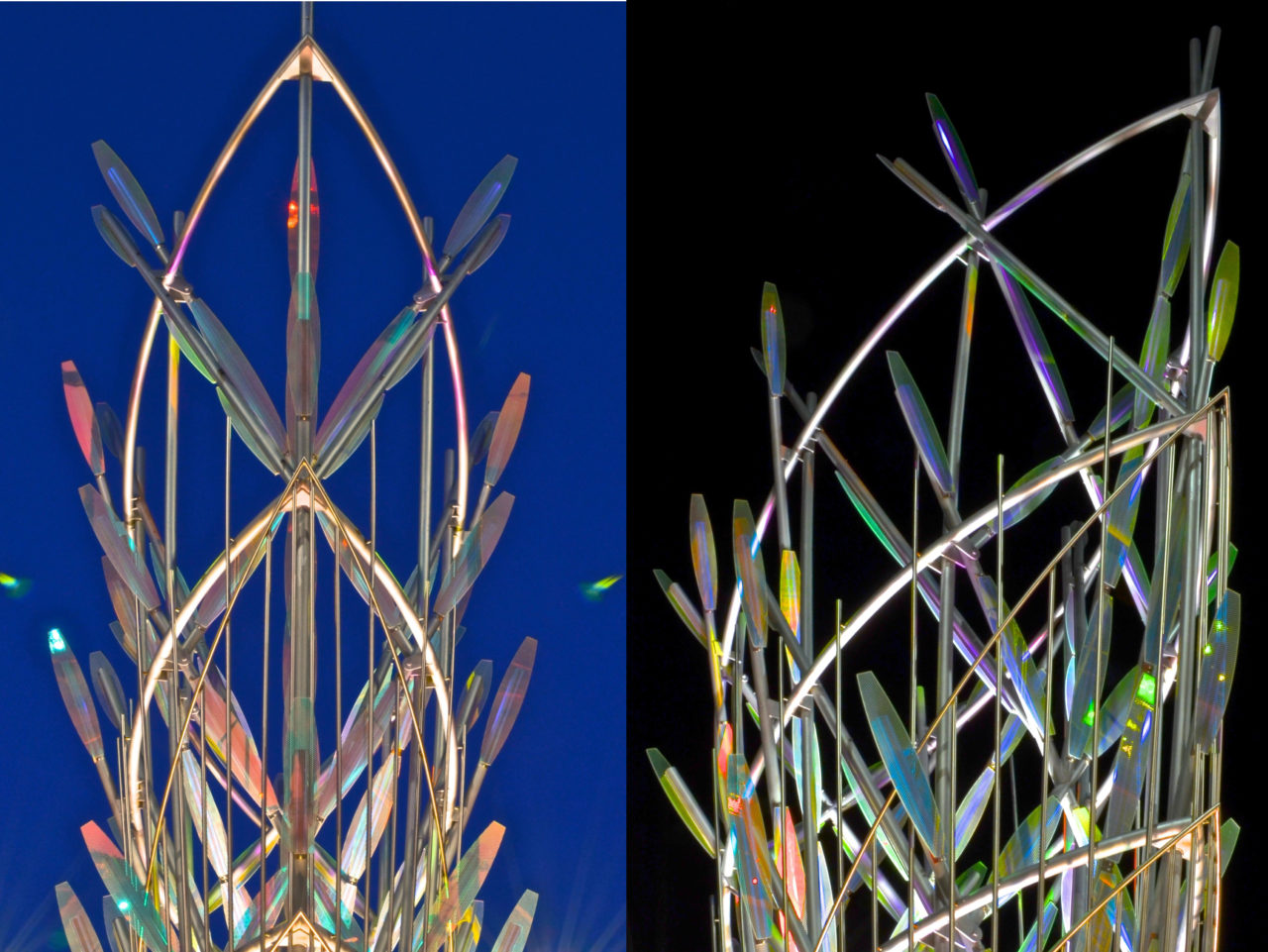 Mesaflora, Mesa AZ / image 3